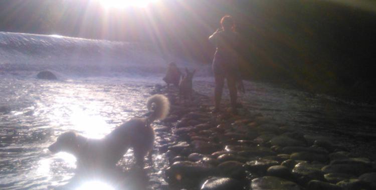 Perros disfrutando de un refrescante baño en un pantano.