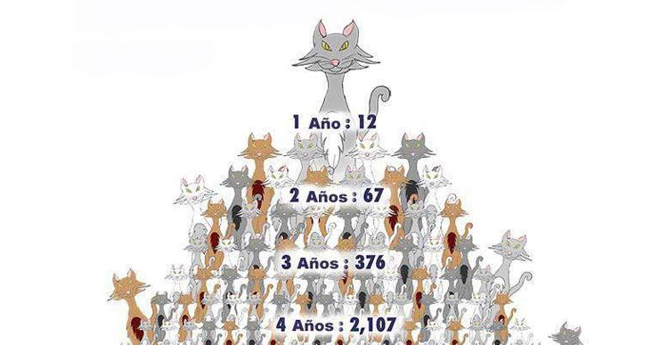 Dibujo explicativo de cómo crecen las camadas de gatos