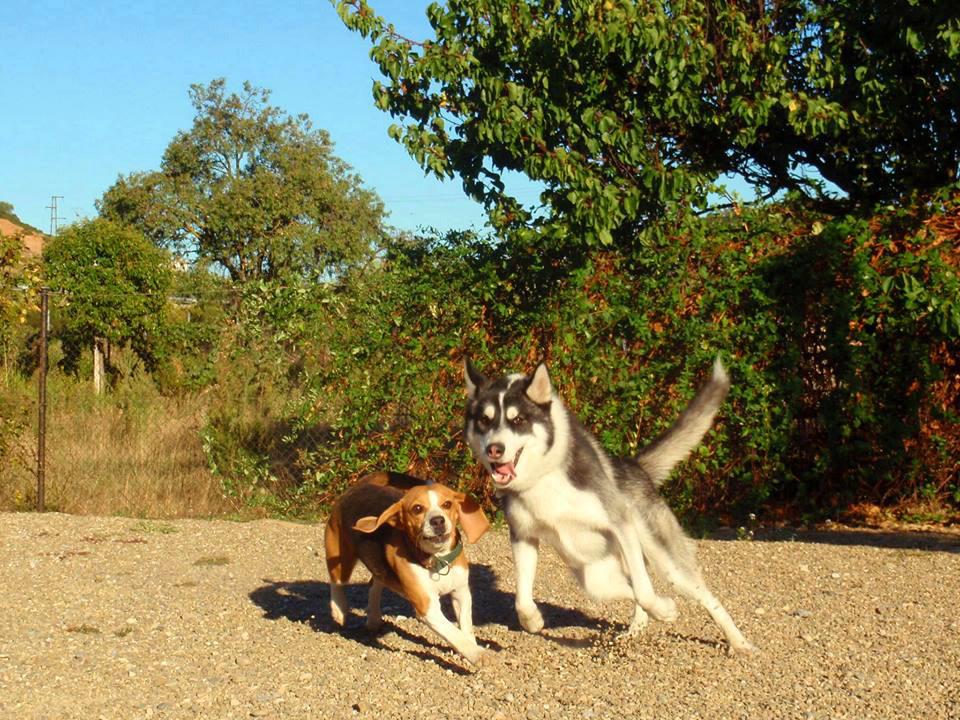 Dos perros corren y juegan en la zona de recreo.