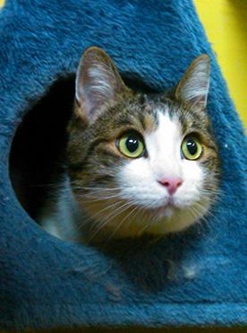Un gato asoma la cabeza por el agujero de uno de los juegos de la residencia felina