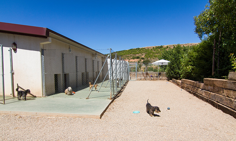 Zona de juegos para perros de razas pequeñas.
