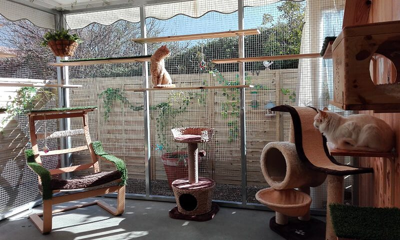Catio y zona de recreo para gatos
