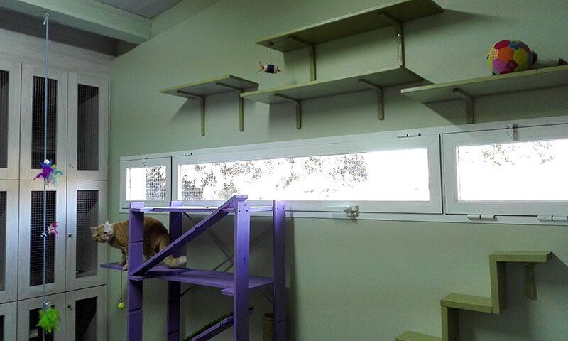 Instalaciones de la residencia para gatos en Peludos, Logroño