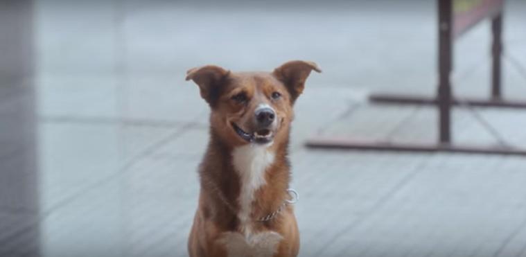 Perro de la Fundación Argentina de Transplantes Hepáticos