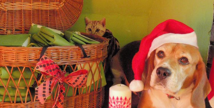 Perro celebrando la navidad en Peludos Residencia Canina y Felina