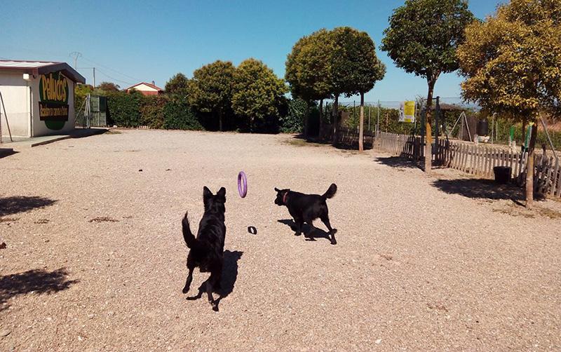 Zona de Juegos para Perros Grandes
