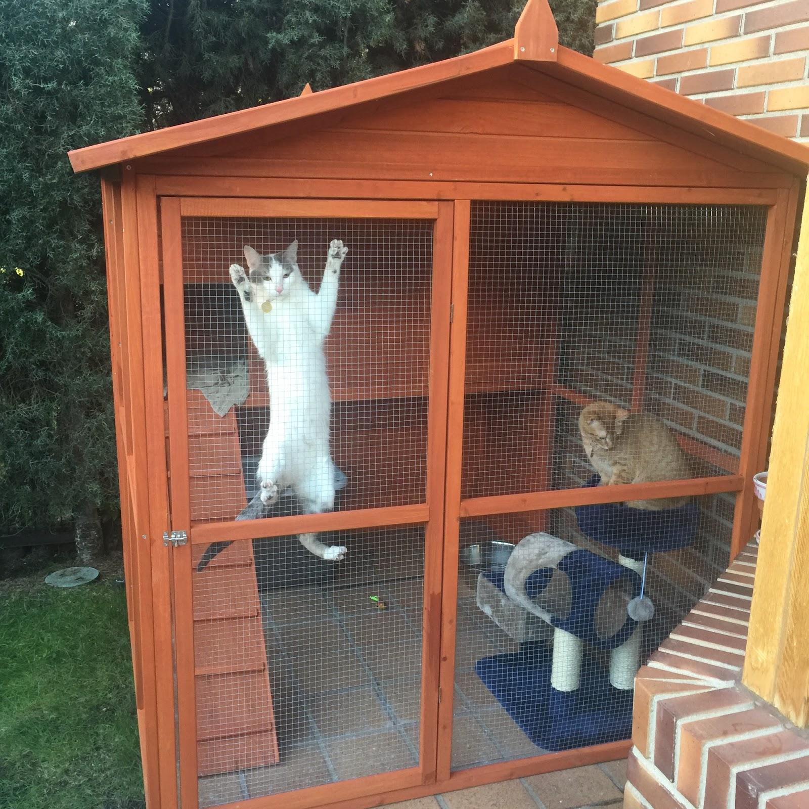 Necesitas un catio peludospeludos - Casa gatos exterior ...