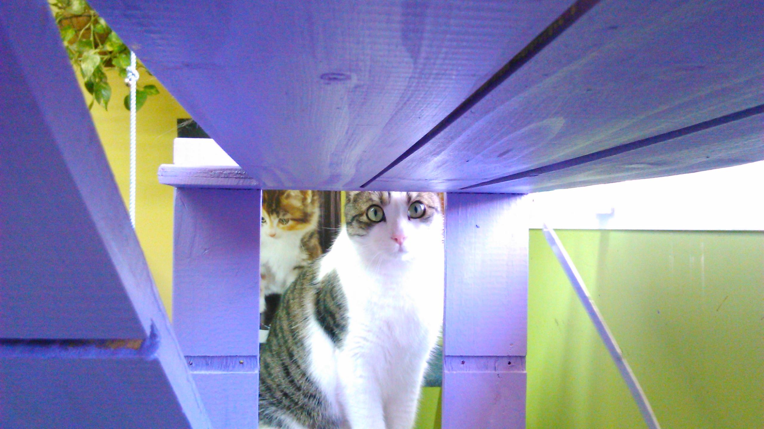 Gato común en la residencia Peludos
