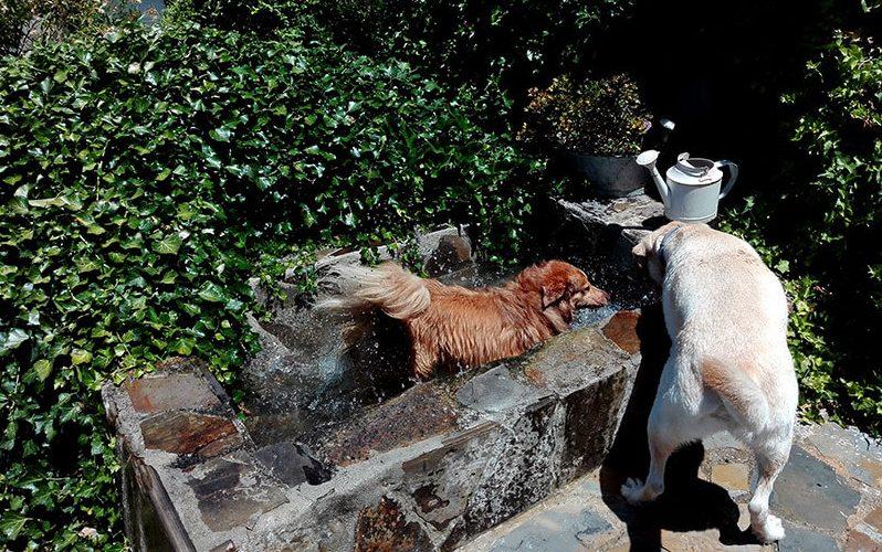Estanque con los perros refrescándose