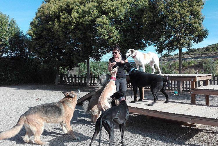 Diana rodeada de perros divirtiéndose durante su estancia en el hotel canino