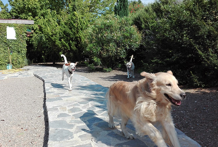 Perros disfrutando de su estancia en el hotel canino