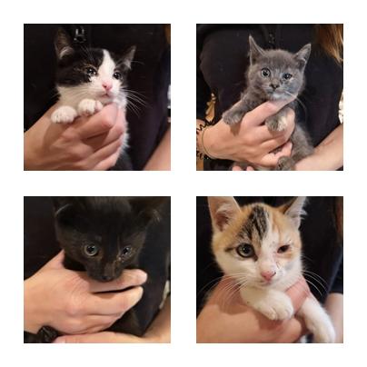 camada de gatitos callejeros