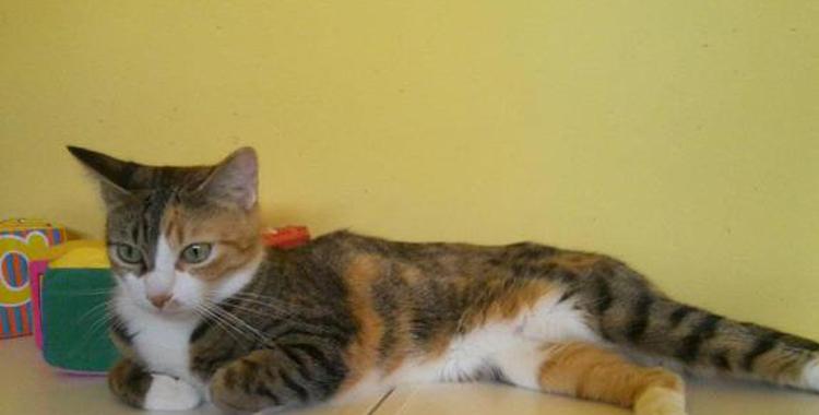 Gato en Peludos Residencia Canina y Felina