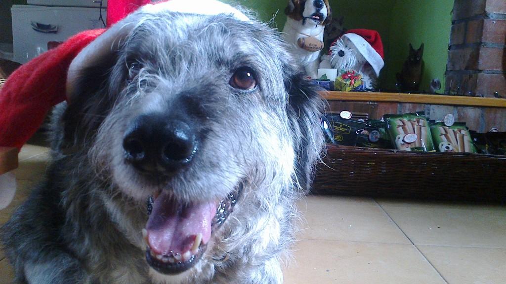 Perro en Peludos Residencia Canina y Felina