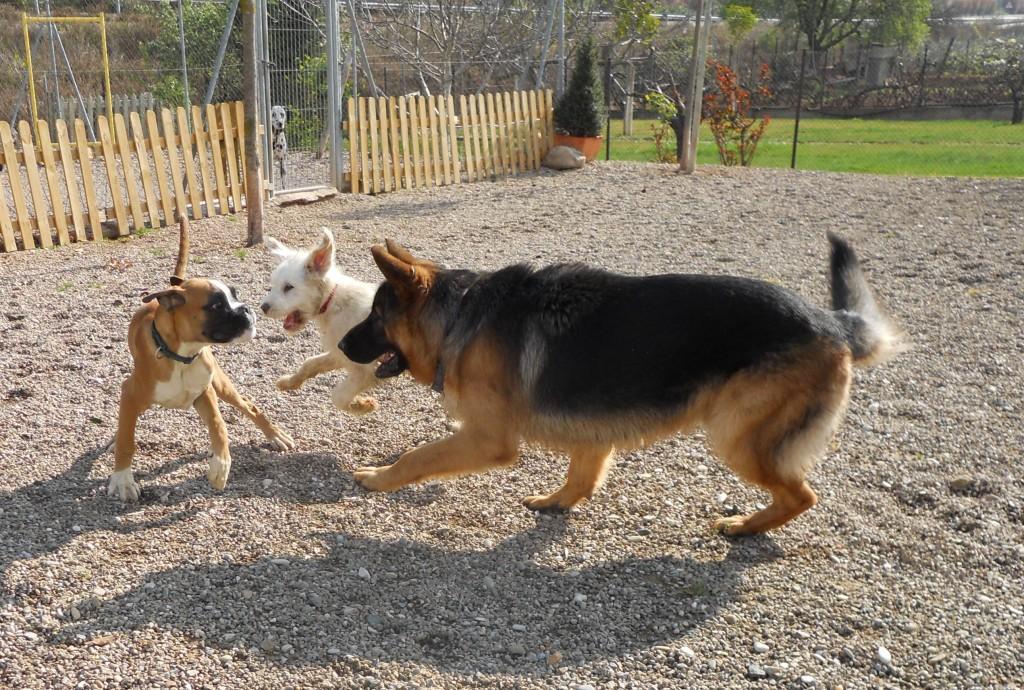 Cachorros jugando en la zona de juegos de Peludos Hotel Felino