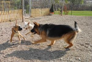 Cachorros jugando en la zona de juegos