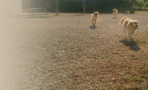 Perros disfrutando en la zona de recreo