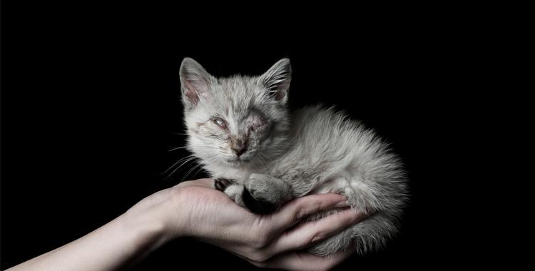 Gato enfermo buscando un hogar