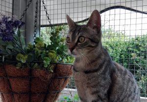 Preciosa gata disfrutando del estimulante catio del hotel felino Peludos