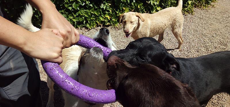 Adiestramiento Canino en Logroño