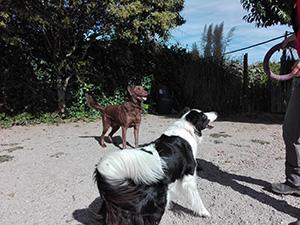 adiestramiento-canino2a