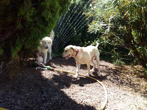adiestramiento-canino3a