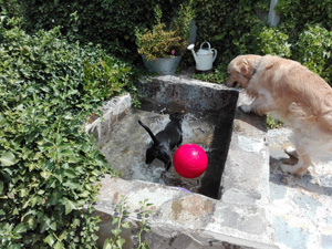 adiestramiento-canino4a