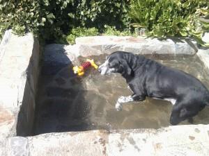 Un baño en el estanque para refrescarse