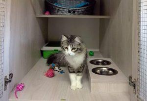 Un gato en las instalaciones del hotel felino Peludos