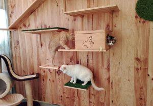 Gatos jugando y disfrutando en la zona de recreo para gatos