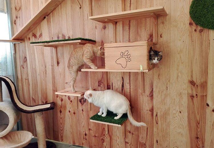 Comodidades, juegos y cuidado, son los ingredientes de la residencia de gatos de Peludos