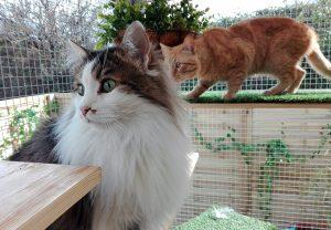 En Peludos los gatos disfrutan de olores, sonidos y bellas vistas