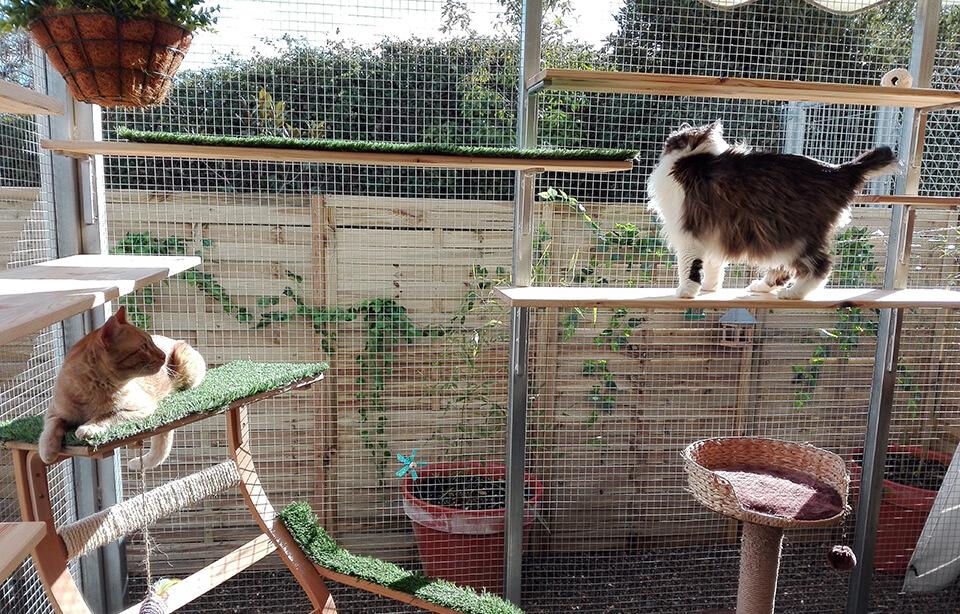 Tanto en la sala de gatos como en las suites de Peludos los huéspedes felinos disfutan de los catios