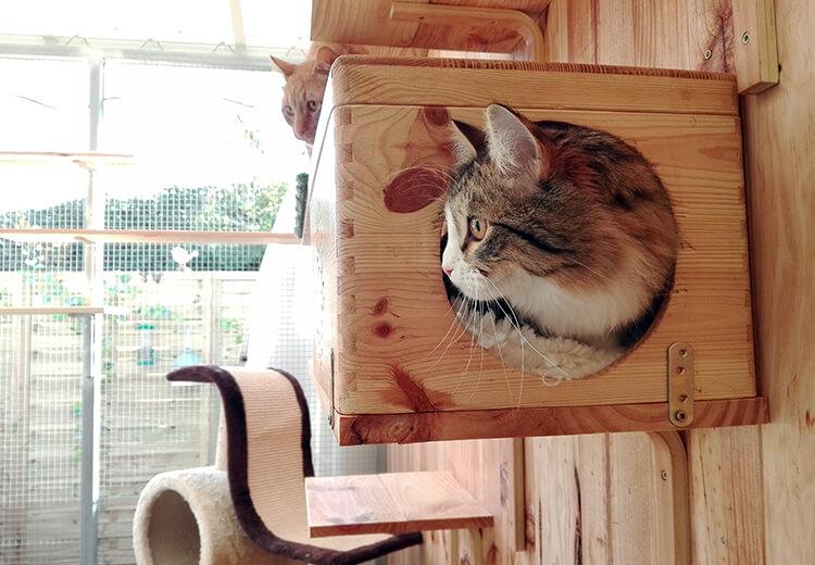 Gatos disfrutando en las instalaciones de la residencia felina de Peludos.
