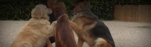 Varios perros juegan en Peludos