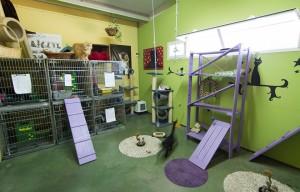 Instalaciones de la residencia felina