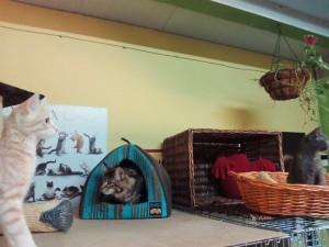 Gatos disfrutando y jugando en la residencia felina.