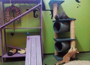Dos gatos disfrutando y jugando en la residencia felina.