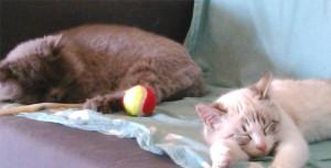 Gatos descansando en casa