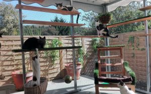 Catio compartido de la sala de gatos