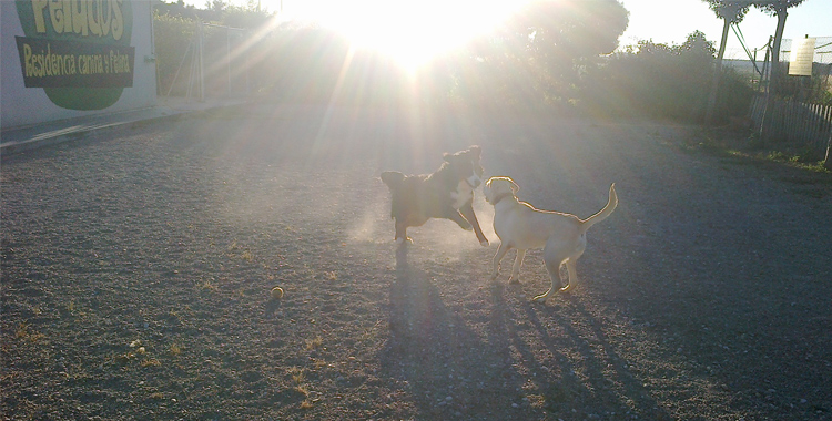 Perros disfrutando y jugando en Residencia Canina y Felina Peludos