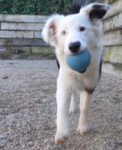 Perro jugando en Peludos Residencia Canina y Felina