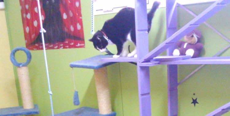 Gato en Residencia Felina y Canina Peludos.