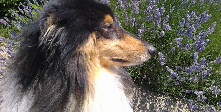 Uno de los clientes habituales de Peludos Residencia Canina y Felina