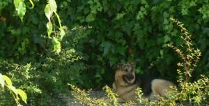 Perro a la sombra en Peludos Hotel Felino y Canino
