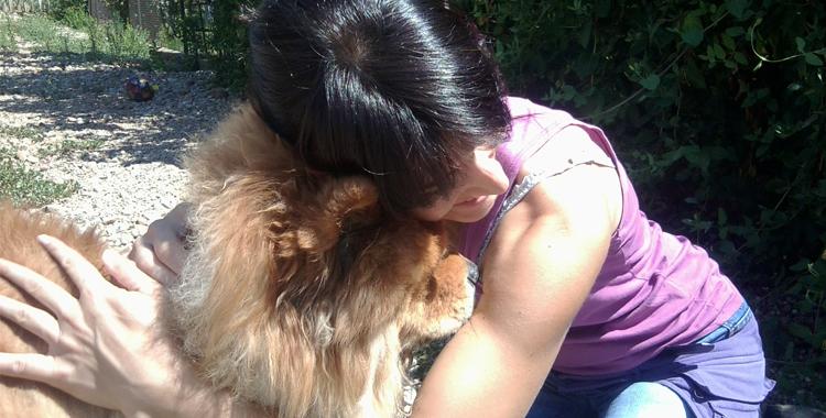 Perro Chow Chow en Peludos Residencia Canina y Felina