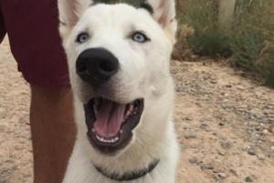 Perro con un Radiocollar en la Residencia Canina y Felina Peludos