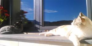 Gato en una venta de la Residencia Canina y Felina Peludos