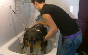 Diana dando un buen baño a un perro.