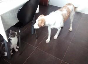 Gato callejero conoce a perra de Peludos